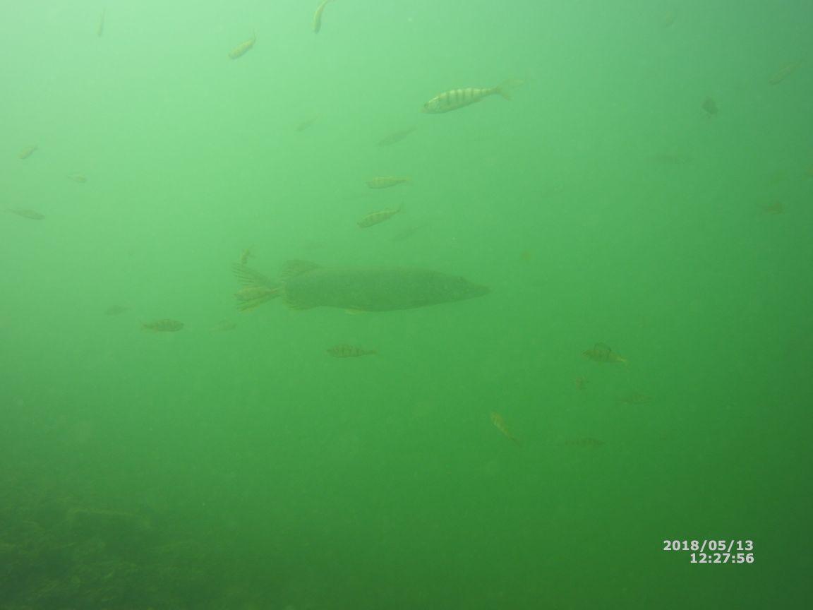20180513 Sicht unter Wasser (3)