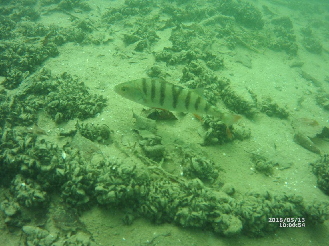 20180513 Sicht unter Wasser (5)